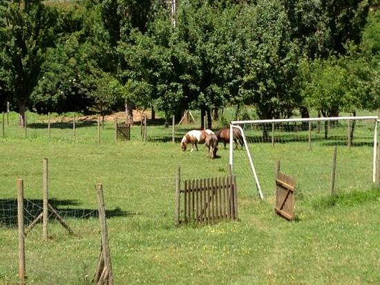 Le Hameau des Genêts : les animaux de la ferme tondent le terrain de foot :-)