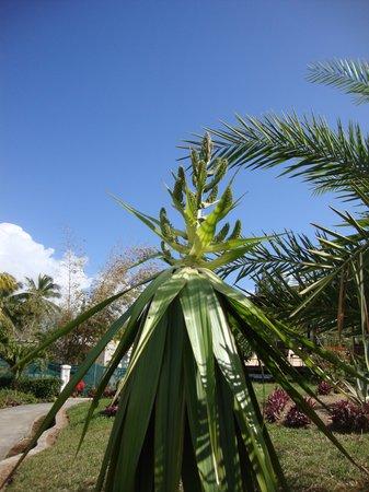 Jalsa Beach Hotel and Spa: Rare flower from Jalsa garden