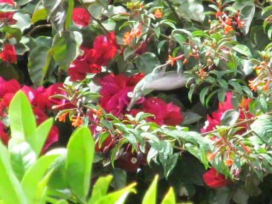 The Green House Peru: Kolibri i aktion