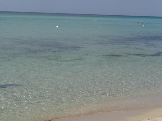 Villa Hermosa Resort : Punta prosciutto. il miglior mare della zona (e forse della puglia)