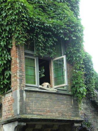 Boottochten Brugge: Fidel, il cane più fotografato di Bruges