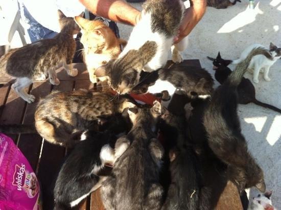 Tala Monastery Cat Park: feeding time for kitty's !