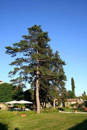 Ristorante La Limonaia Snc Di Silvia Fontanelli & C.: giardino esterno