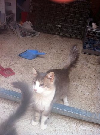 Tala Monastery Cat Park: this cat is fully blind but is settled and happy