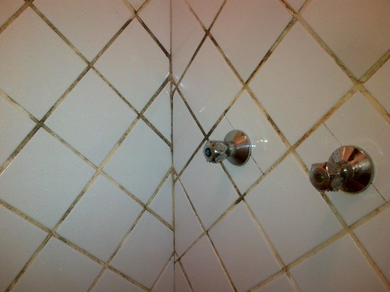 Gecko Lodge: Mold in the showers.