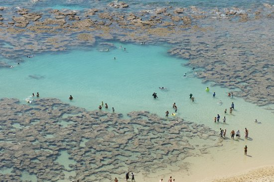 ハナウマ湾自然保護区, サンゴ礁の群生。