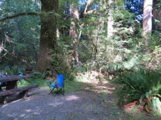 Hoh Campground : The forest surrounds you in dappled shade