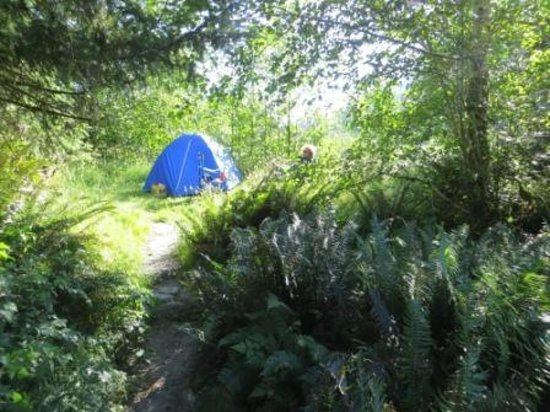 Hoh Campground : Loop A - a glade of seclusion