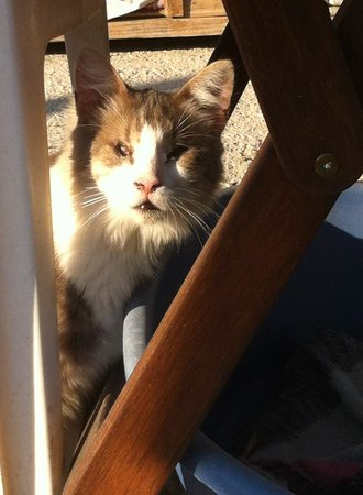 Tala Monastery Cat Park: Sarah the blind cat.