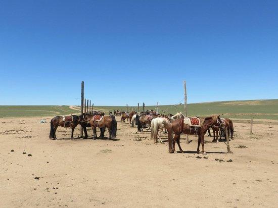 Xilamuren Prairie: horse