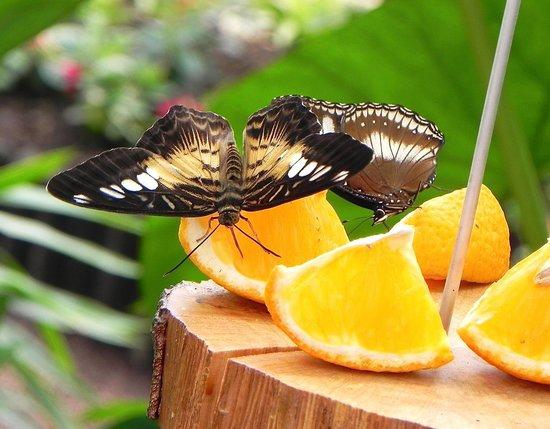 Jardin Des Papillons: Beautiful butterflies