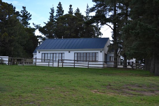 High Season Farm: Agapanthas & Protea Cottages