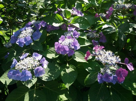 Casa Violetta: Giardino