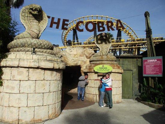 Ratanga Junction : The Cobra Roller Coaster