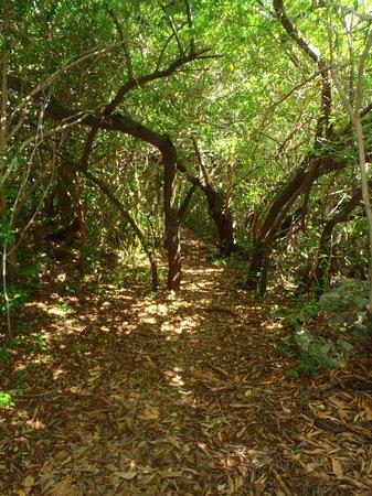 Blue Hole Park : A pathway