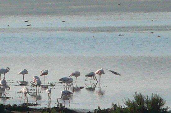 Laguna de Fuente Piedra: .