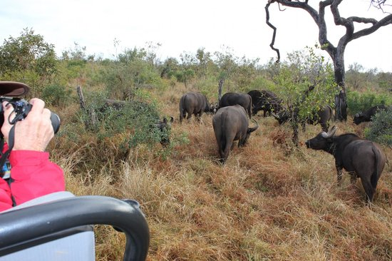 Dulini Lodge: on the game drive