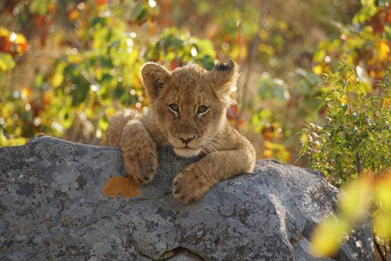 Dulini Lodge: posing for us