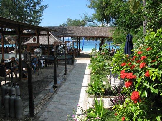 Trawangan Dive Resort: Le club