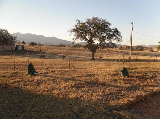 Xanadu Ranch GetAway / Private Guest Rooms / Guest Ranch & Horse Motel: Santa Rita Mountains