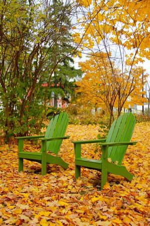 Inn on the Green: Back yard with Fall color