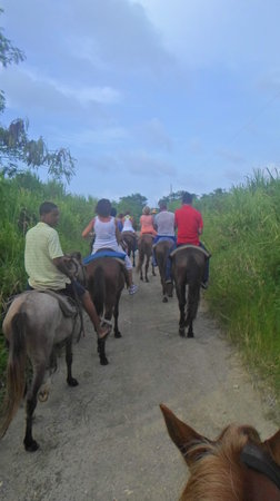 Rancho Salvaje: With the horses thrue the cainfields