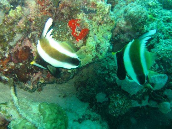 Seaventures Dive Rig: photo taken just off Mabul