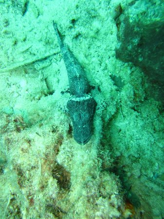 Seaventures Dive Rig: An aligator fish I think