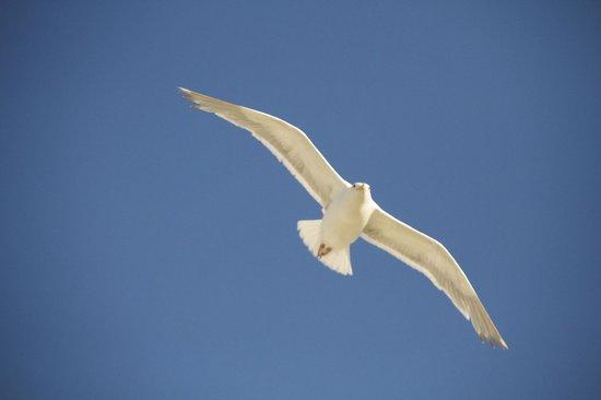 Victoria Regent Hotel: Flying Seagle
