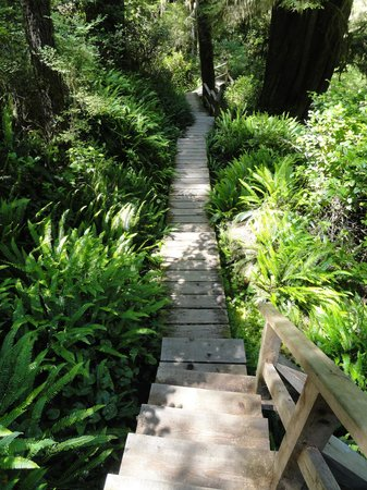 Gull Cottage Bed & Breakfast: Rainforest Trail in Pacific Rim (wonderful hike)