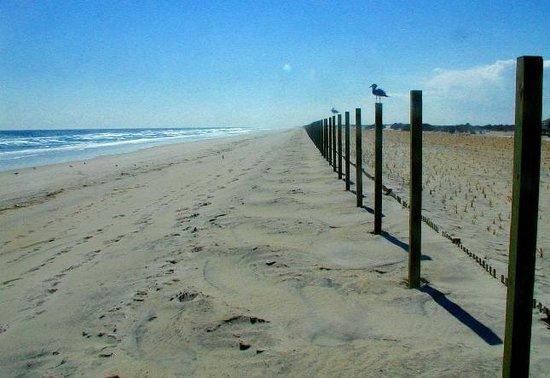 Assateague Beach : Maryland side of Assateague