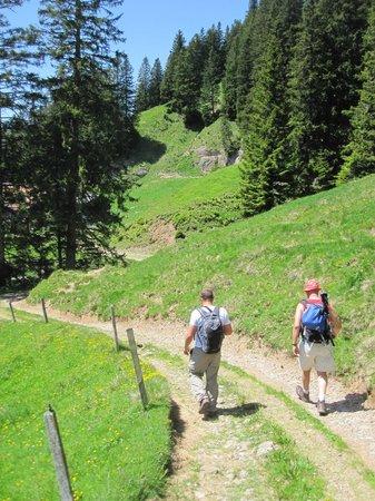 ECHO Trails: Hiking down Mt Rigi