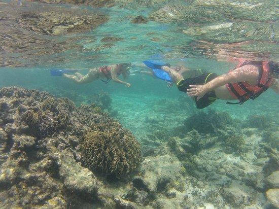 valentin imperial riviera maya snorkeling the reef tripadvisor valentin imperial maya