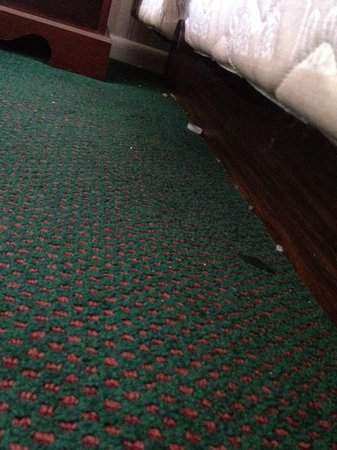 Hotel Carlisle: They clearly didn't bother vacuuming.
