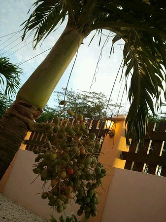 Camacuri Apartments Aruba: Camacuri