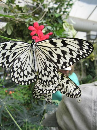Beauty in Butterfly & Orchid Pavilion