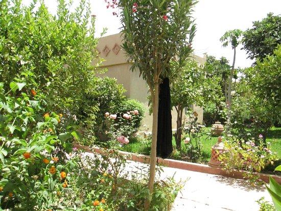 Hotel Dar Zitoune: jardins
