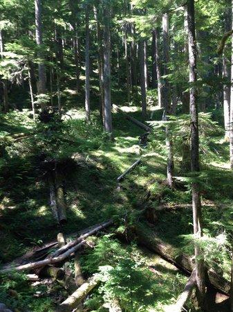 Breitenbush Hot Springs: The emerald forest trail