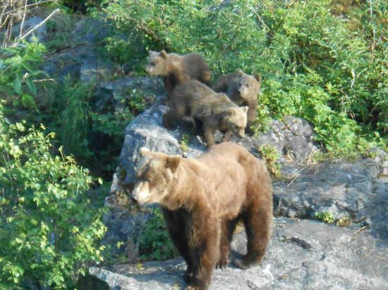 Alaska Fishing & Lodging: Mama and her cubs - 30 feet away!