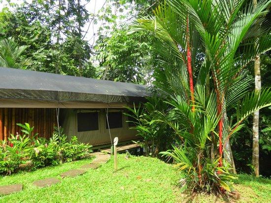 Rio Tico Safari Lodge: tente et salle de bain derriere