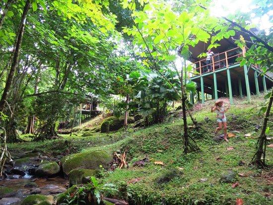 Rio Tico Safari Lodge : tente vu de la rivière