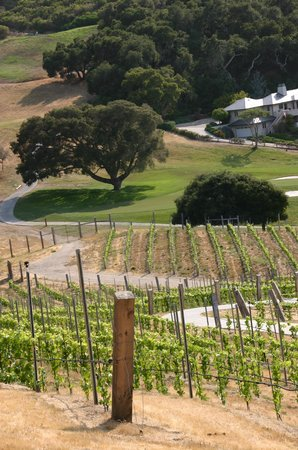 Carmel Valley Ranch: Vineyards on the property