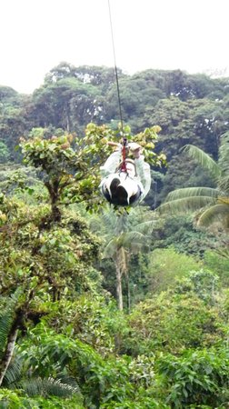Tucanopy: High above the trees!