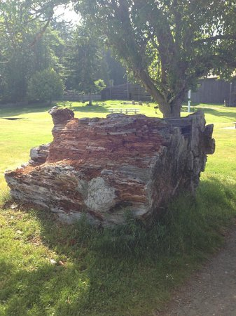 Blake Island State Park: Remains of huge log from the old days.