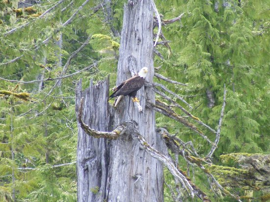 Black Bear Inn: Ketchikan Eagle