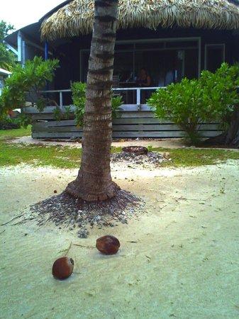 Aretai Beach Villas: CocoNuts