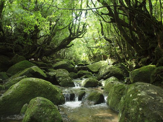 Restaurants in Kumage-gun Yakushima-cho