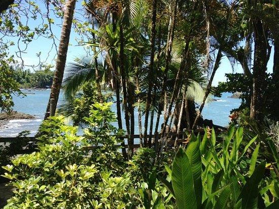 Casa Corcovado Jungle Lodge: The arriving
