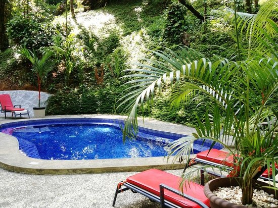Casa Corcovado Jungle Lodge: The Forest Pool