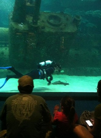 North Carolina Aquarium at Pine Knoll Shores: Diver in the shark tank